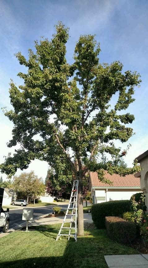 Tree Trimming Sacramento