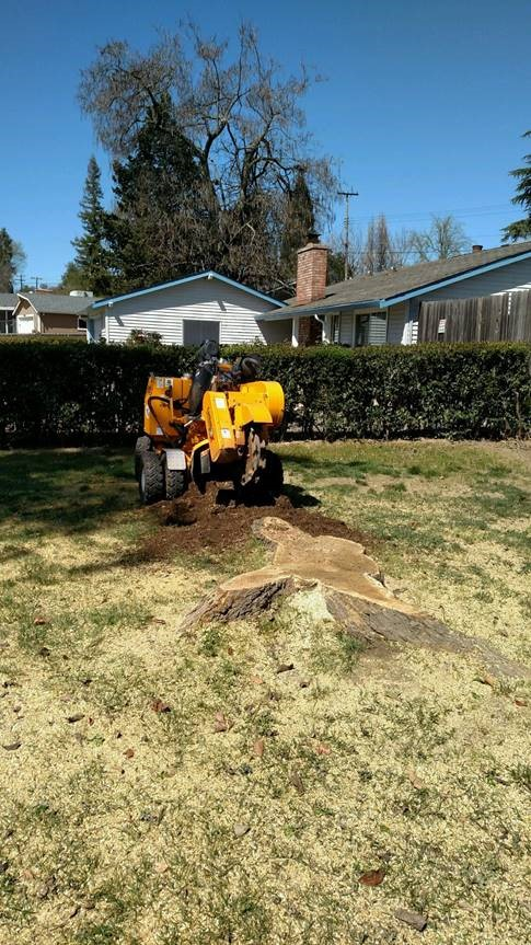 Stump Removal Roseville
