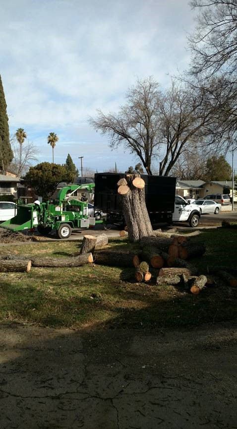 Tree Removal Rocklin