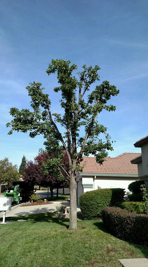 Tree Branch Removal Sacramento